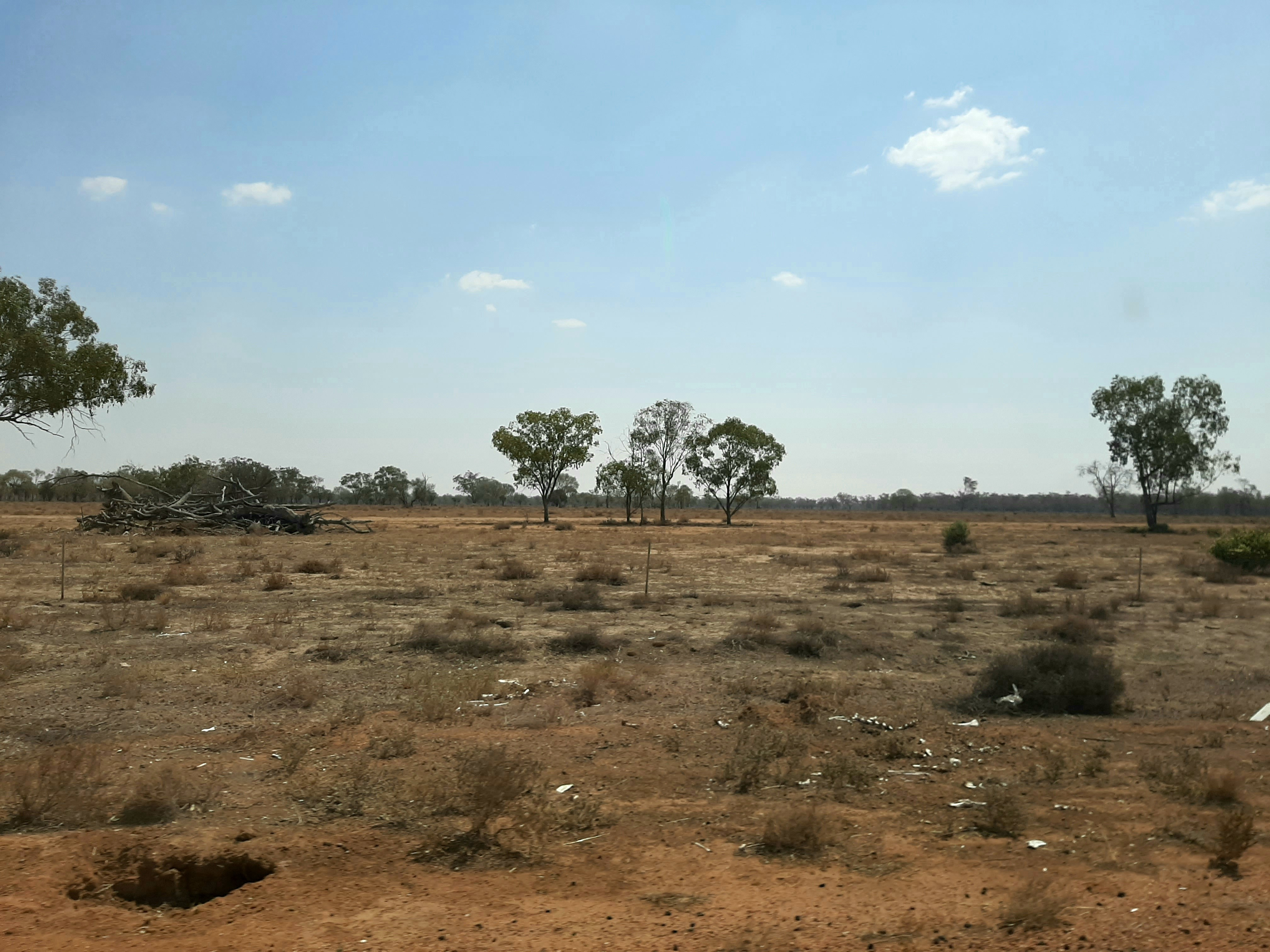 An image of an open plain with some small shrubs between mostly dirt. There are 5 trees in the distance - 3 of these are together in the centre and there are 1 on each side at the edge of the picture.